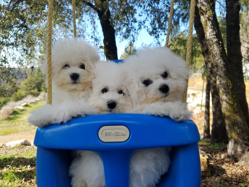 Wozzy Pups!
